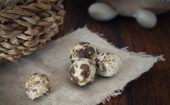 Raising quail for eggs
