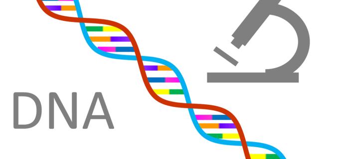 DNA Genetics - Clan Mating